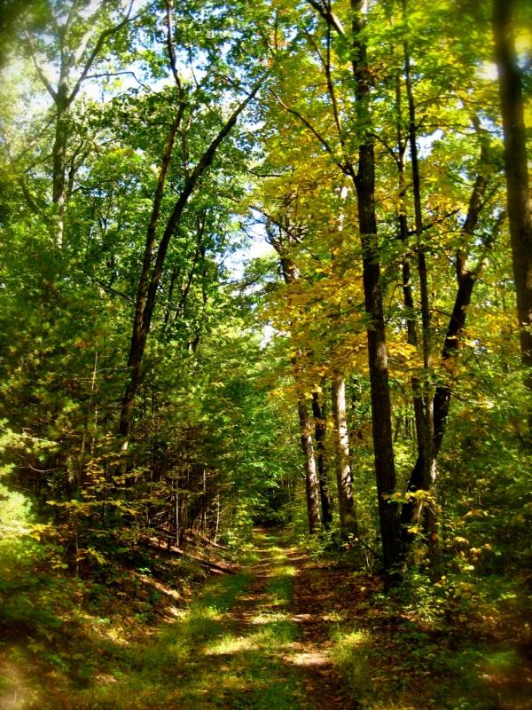 Greenwood Furnace State Park, Pennsylvania